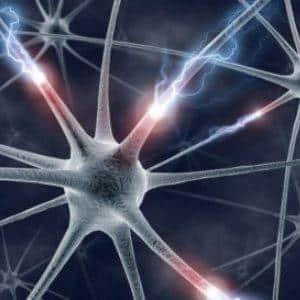 Нейрон - единица НС