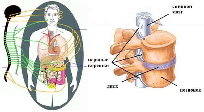 Как лечить экстрасистолию при остеохондрозе