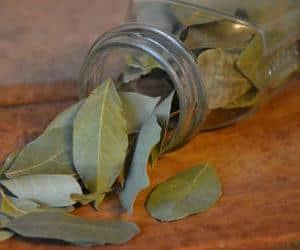 Как лечить суставы лавровым листом