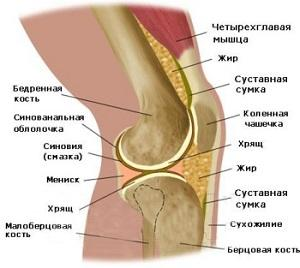 Структура коленного сустава человека узор макси для суставов