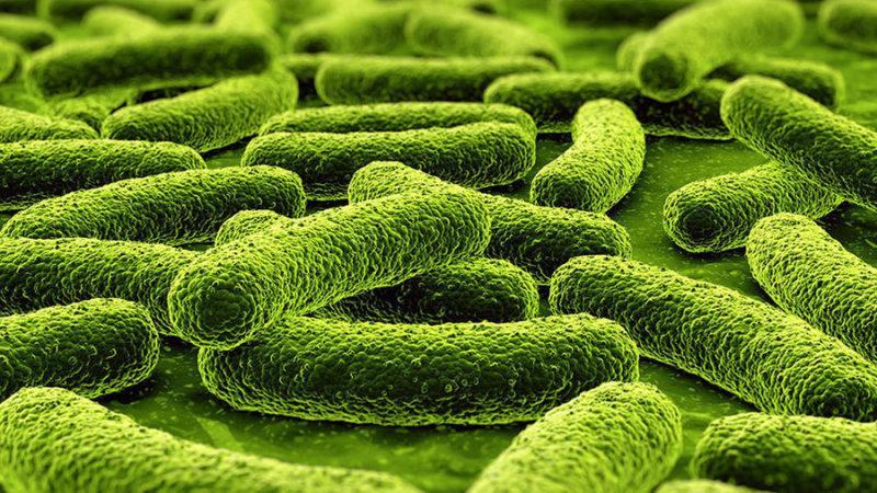 Что такое туберкулез позвоночника и как его лечить