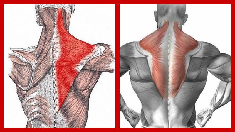 Как избавиться от боли в трапециевидной мышце