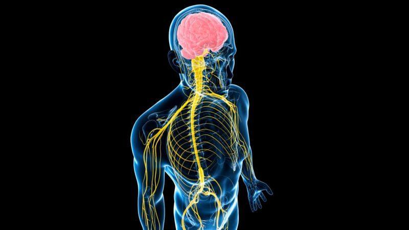 Заболевания спинного мозга