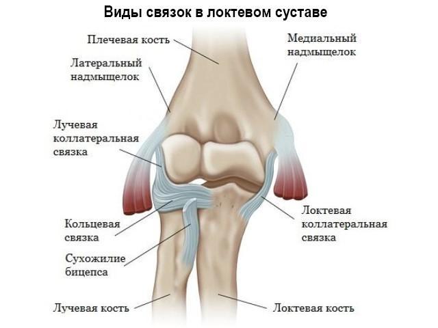 Изображение - Связки локтевого сустава анатомия 76296_-TV-TBTGTBTV-5