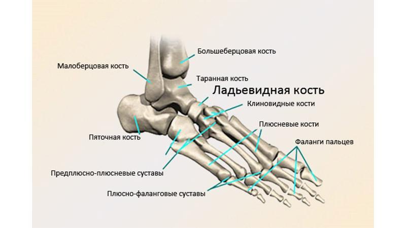 Как лечить остеохондропатию стопы