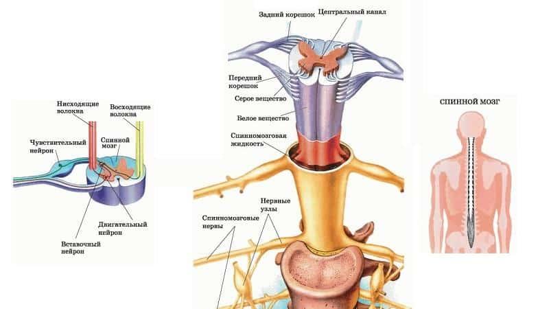 Как лечить стеноз позвоночного канала поясничного отдела
