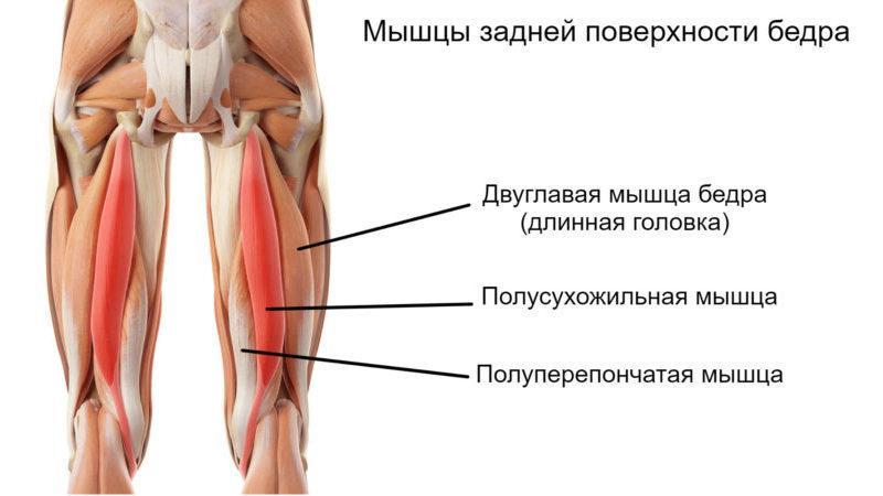 Какие кости образуют тазобедренный сустав