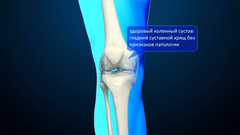 Как устроена нога человека