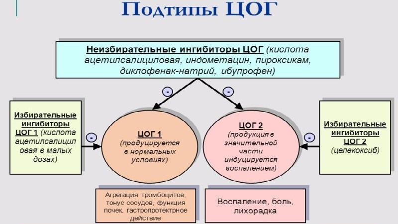 Что такое ингибиторы ЦОГ 1 и ЦОГ 2