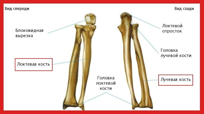 Как лечить вывих лучевой кости