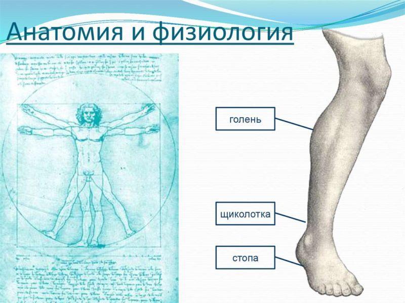 Пищевод человека, его строение и основные заболевания