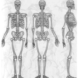 Все кости человека и их названия