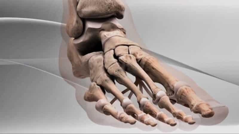Как устроена стопа человека