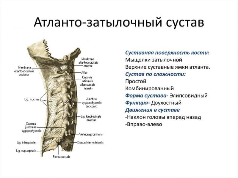 Анатомия и болезни атлантозатылочного сустава