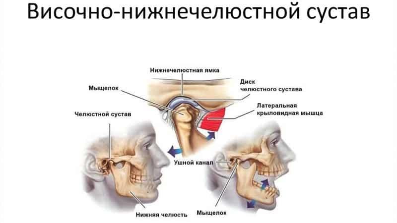 Особенности строения и функции височно-нижнечелюстного сустава